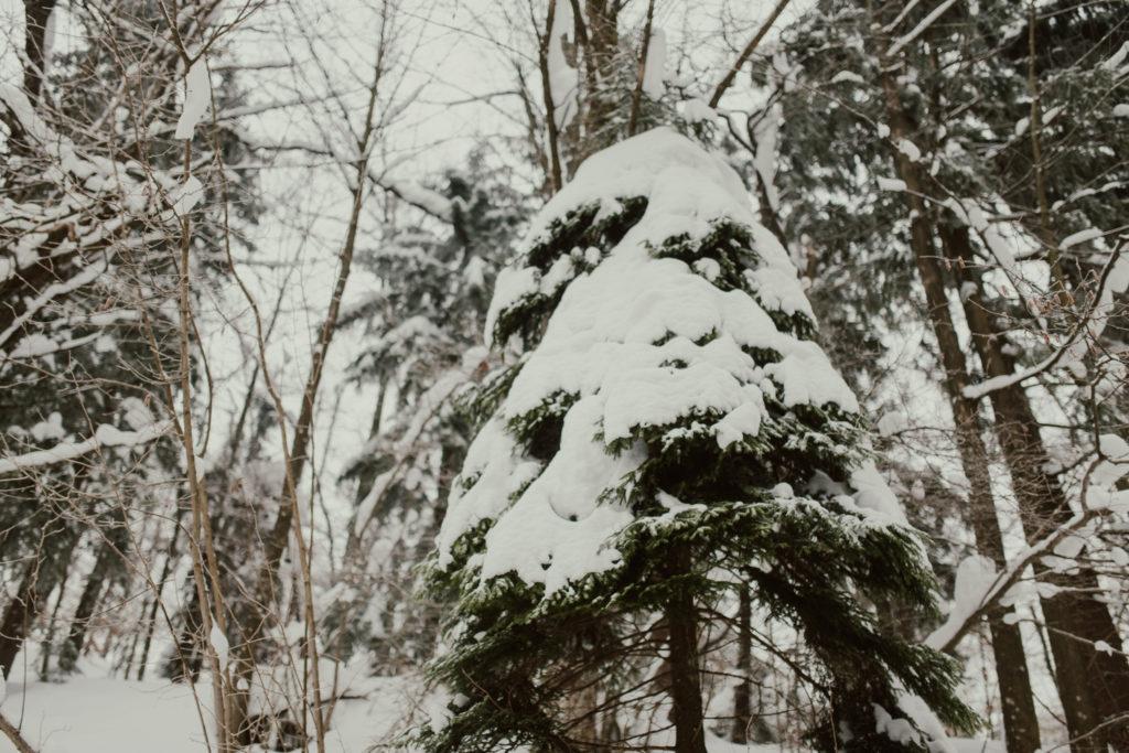 zimsko fotografiranje logatec medvedje brdo